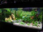Как красиво оформить аквариум – фото, как правильно оформить, аквадизайн, красивое оформление корягами, камнями, растениями, идеи и варианты для небольшого и большого аквариума