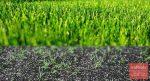 Как правильно сеять газон – Как сеять газонную траву правильно — пошаговая инструкция с фото и видео